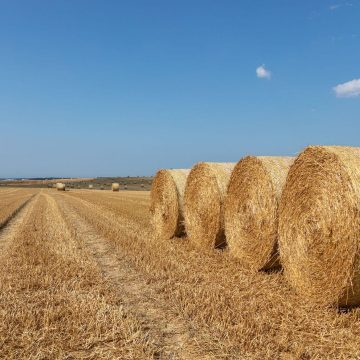 Photo of hay field to show the difference between hay vs. straw